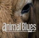 Animal Blues